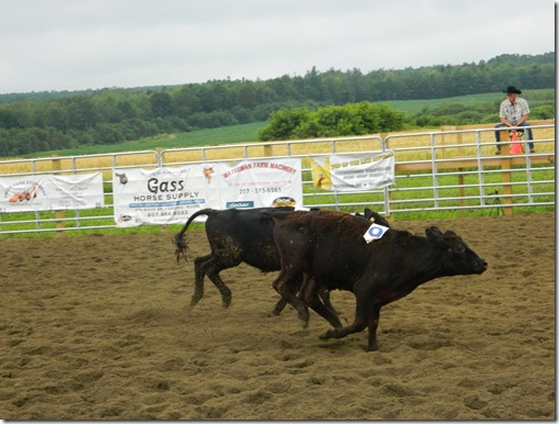 Team Penning 2011 151