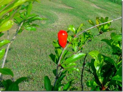 11-fruit