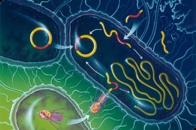 bioemdicina bactéria