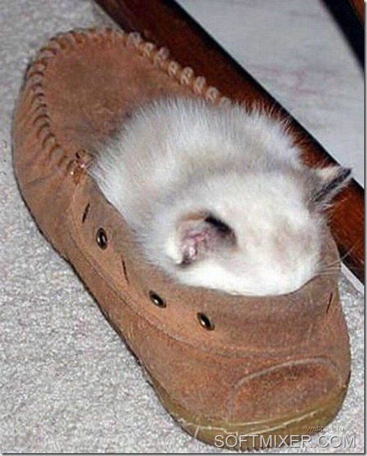 slp_cats_37