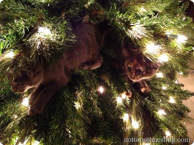 Kitten Ornaments
