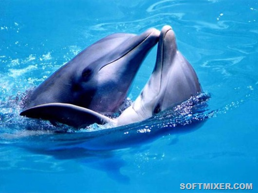 dolphins_see_fetus_2