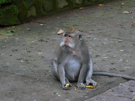 Bali picture: monkeys in Bali's Monkey Forest