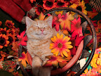 Dreaming of Catching Mice Cute Kitty Cat Kitten Smiling in his Sleep, Fall Autumn Gerbera Flowers For purchase options, please visit: www.zazzle.com/bedazzle_*/ www.redbubble.com/people/chantalc www.imagekind.com/MemberProfile.aspx?MID=0ce77662-2c03-43db-a99e-624f597d2c1a http://fineartamerica.com/profiles/chantal-c.html www.bigstockphoto.com/profile/Chantal%20PhotoPix www.dreamstime.com/Chantal777_info Join me on Facebook http://www.facebook.com/chantal.photopix?v=info#!/chantal.photopix Follow me on Twitter! https://twitter.com/#!/ChantalPhotoPix Join me on LinkedIn http://www.linkedin.com/profile/view?id=138372879&authType=name&authToken=uTXK&locale=en_US&pvs=pp&trk=ppro_viewmore Squidoo Lens http://www.squidoo.com/lensmasters/ChantalPhotoPix