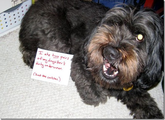 dog-shaming-bad-2