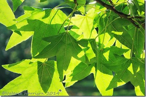 40-leaves