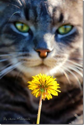 pouvoir des fleurs jenna