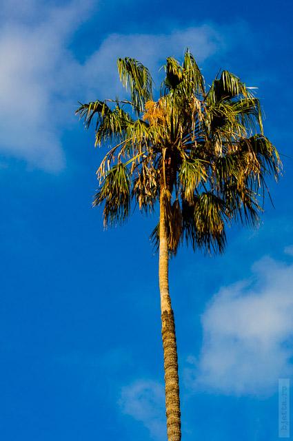 63. И небо красивое. И пальмы.