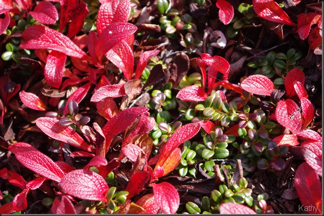 Bear Berry and Cranberry