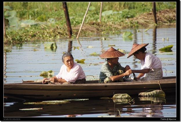 Myanmar314