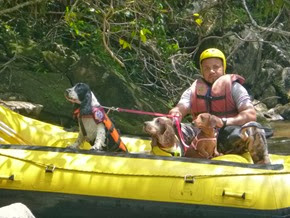 Pets adventure 17 (138)