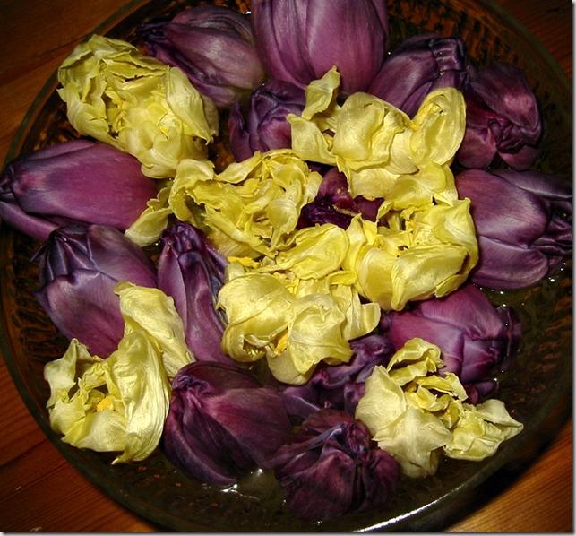 Tulipanhoder i vann