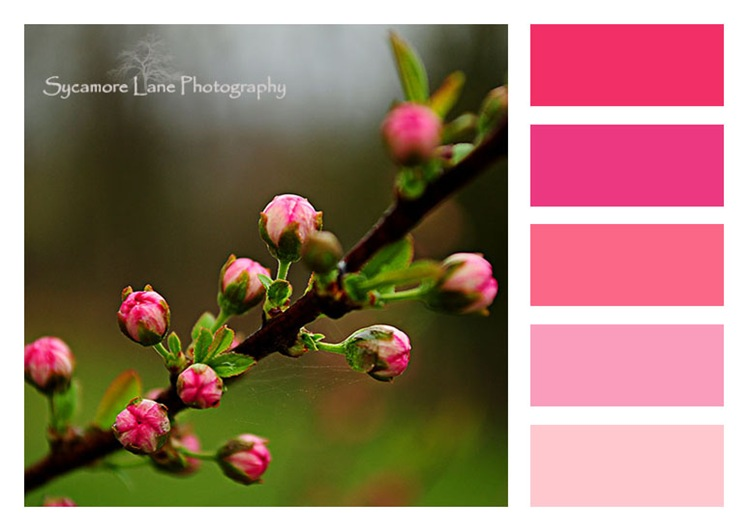 flowering almond color block