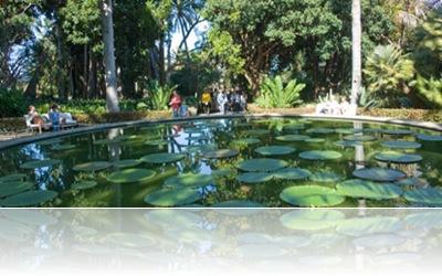 Jardines del teide jard n de aclimataci n de la orotava jard n bot nico - El botanico puerto de la cruz ...