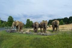 2011.07.26-042 éléphants