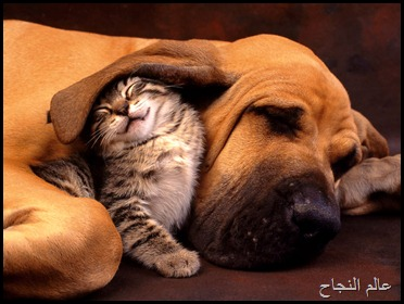 كلب وقطة نائمان