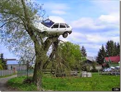 CAR-IN-TREE - Copy