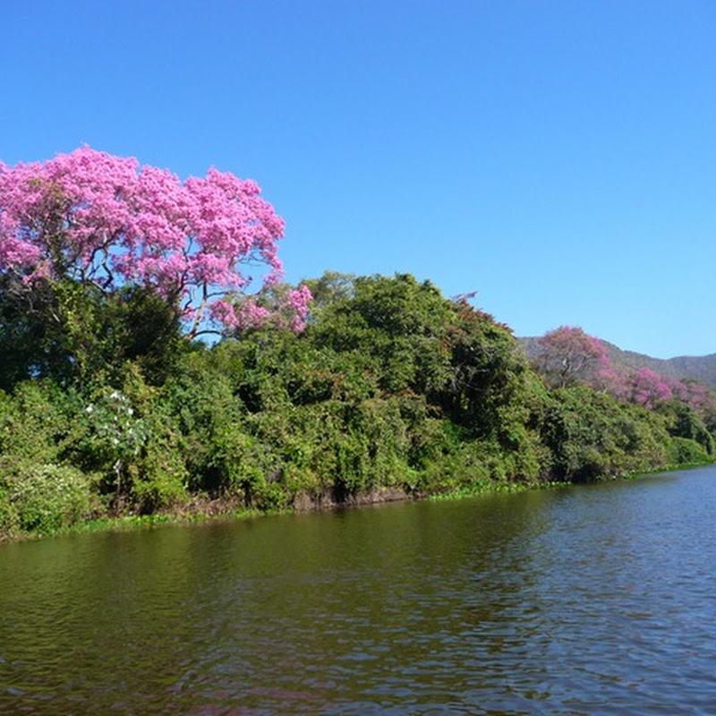 Época das secas no Pantanal: uma explosão de vida!