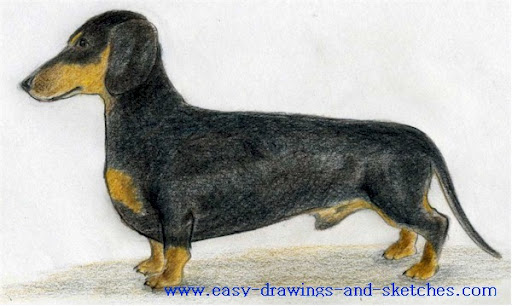 how to draw dog jpg how to draw a dog a dachshund drawings gallery ...