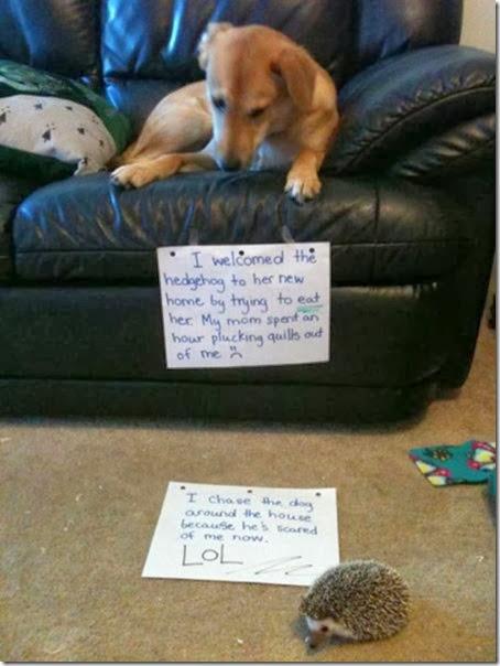 dogs-dirty-secrets-4