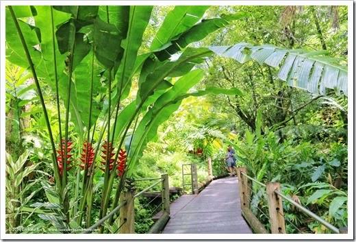 140728_HawaiiTropicalBotanicalGarden_0025
