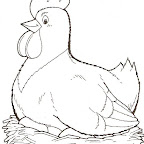 gallina nido.jpg
