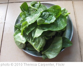 'Fresh spinach' photo (c) 2010, Theresa Carpenter - license: http://creativecommons.org/licenses/by-sa/2.0/