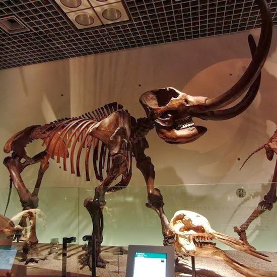 Extinct animals found alive