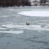 Buck on Ice from Steph
