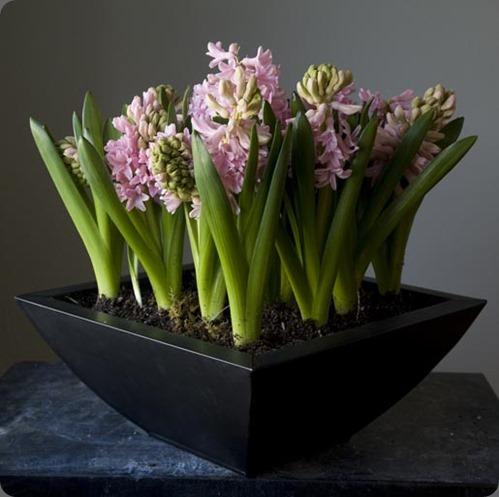 DSCF2811-2small bloom by Anuschka