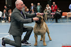 20130510-Bullmastiff-Worldcup-0716.jpg