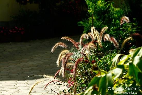 20110914_grasvind2