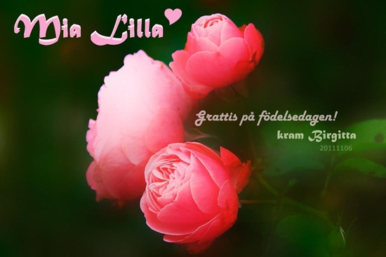 card_20111102_mialilla