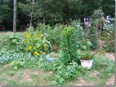 garden july 004