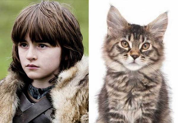 E se os personagens de Game of Thrones fossem gatos 12