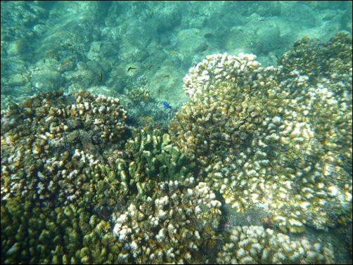 Hard Coral - Los Frailes