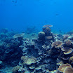 Great Barrier Reef an underwater garden.jpg
