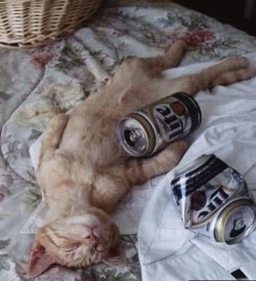 Cats Will Sleep Anywhere 29