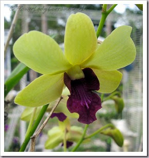 03-28-orchids3