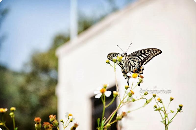 Butterfly-(3)