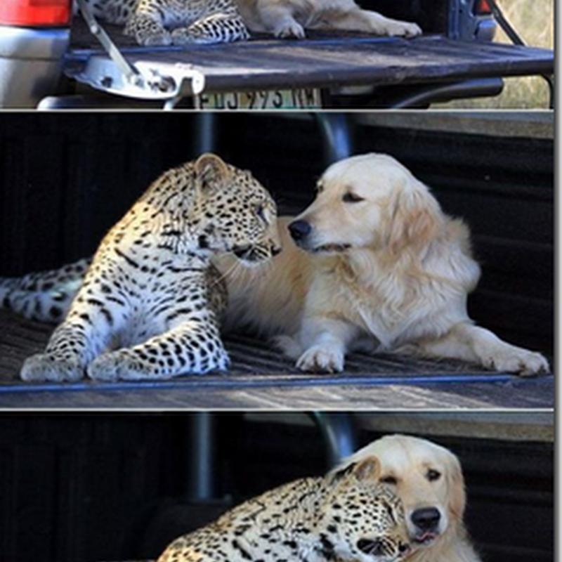 Gambar: Hubungan Terlarang ! Demi Cinta !!
