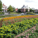 many flowers at huis ten bosch in Sasebo, Nagasaki, Japan