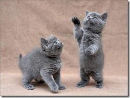 10 -Fotos de gato buscoimagenes (22)