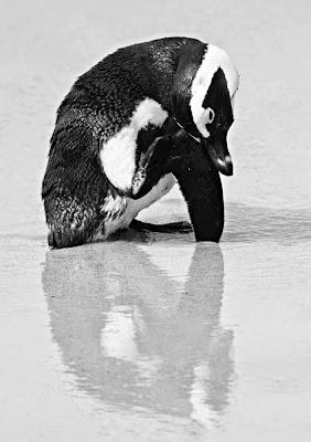Pingüino.jpg