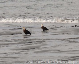 Eagles on Beach