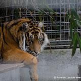 Heidelberger-Zoo (34 von 49).jpg