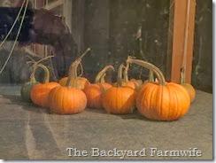 Maple Pumpkin Butter - The Backyard Farmwife