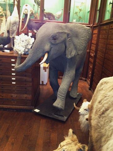 [elephant%255B9%255D.jpg]