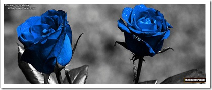 Blue-Rose-fb-covers