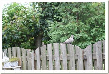 vogels in de tuin 010